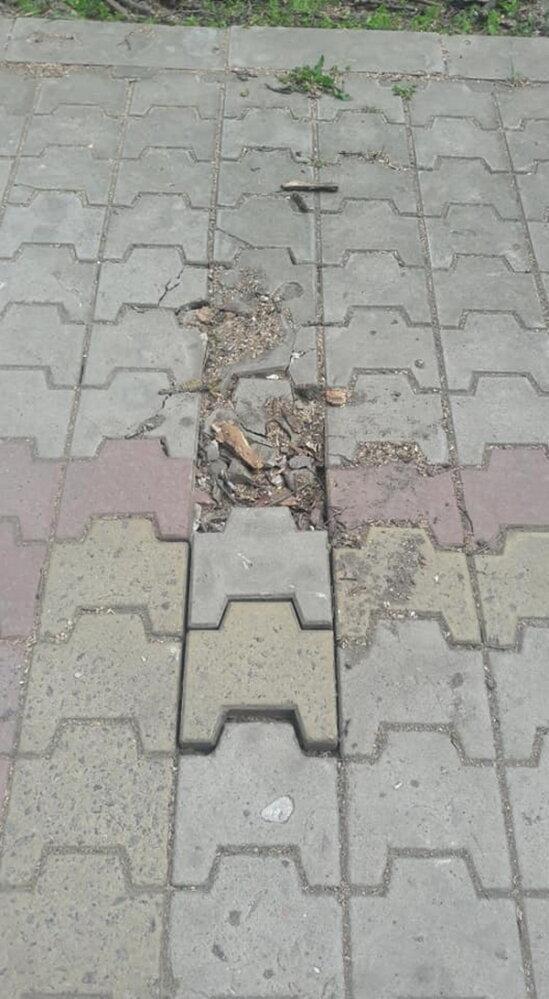 Обрезая деревья, подрядчик разрушил тротуарную плитку и асфальт в Корабельном районе (Видео) | Корабелов.ИНФО image 3