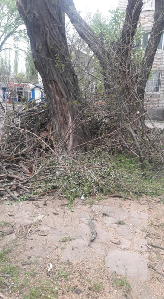Обрезая деревья, подрядчик разрушил тротуарную плитку и асфальт в Корабельном районе (Видео) | Корабелов.ИНФО image 5