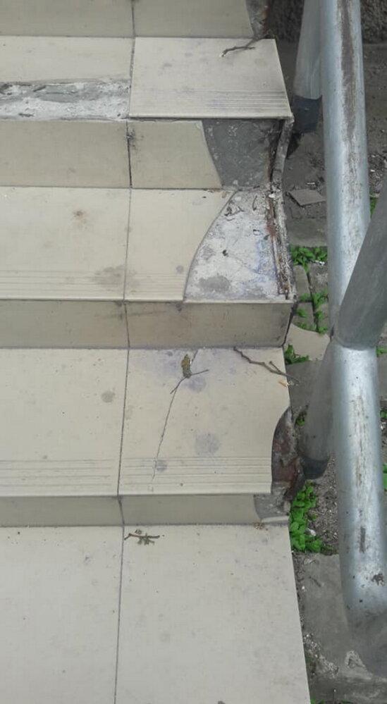 Обрезая деревья, подрядчик разрушил тротуарную плитку и асфальт в Корабельном районе (Видео) | Корабелов.ИНФО image 6