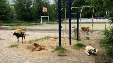 бездомные собаки в Корабельном районе г. Николаева