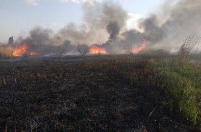 В Корабельном районе на берегу реки из-за поджога выгорело больше 2 га камыша | Корабелов.ИНФО