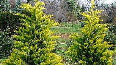 Пенсионерке дали условный срок за кражу декоративных деревьев в Корабельном районе | Корабелов.ИНФО