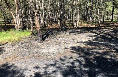 В Балабановском лесу в Николаеве произошел пожар | Корабелов.ИНФО