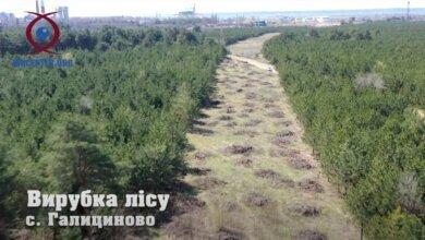 Рубить лес возле НГЗ под ж/д ветку для терминала Фалько начали без общественных слушаний (Видео) | Корабелов.ИНФО image 3