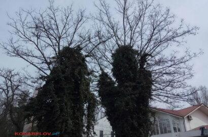 деревья в Корабельном районе