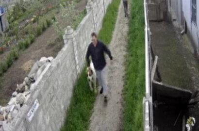 Алабай загрыз маленькую собачку на прогулке: еще одно нападение агрессивного пса в Корабельном (видео) | Корабелов.ИНФО
