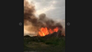 пожар: горит камыш в Корабельном районе г. Николаева 12.05.2021