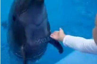 дельфин и ребенок