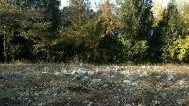 мусор вдоль дороги