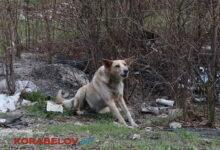 бродячая собака в Кульбакино