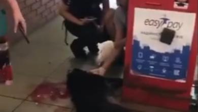 убитая собака