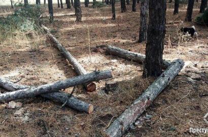рубят Галицыновский лес