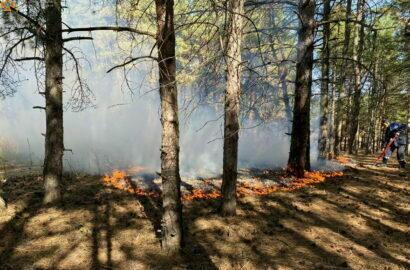 пожар в Балабановском лесу 04.10.2021