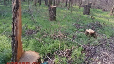 Балабановский лес